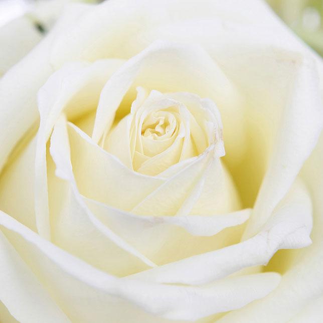 Blumensprache: Blumen und ihre Bedeutung zum Valentinstag - Blick